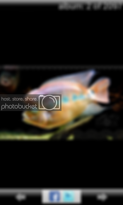 [Smartmobile] Photobucket Step-By-Step AROWANA Forum ASIAN AROWANA,AROWANA,STINGRAY The2sheet