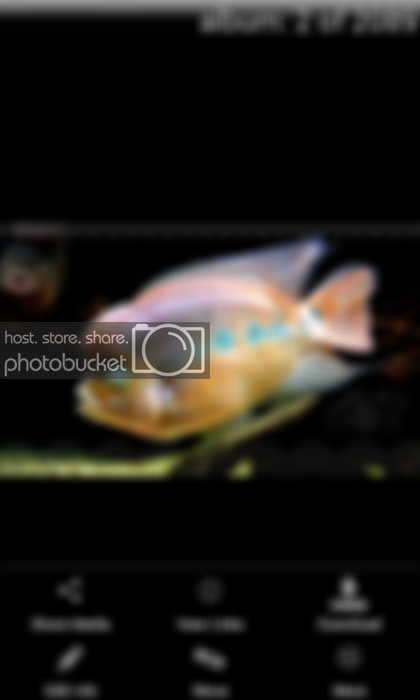 [Smartmobile] Photobucket Step-By-Step AROWANA Forum ASIAN AROWANA,AROWANA,STINGRAY The3sheet
