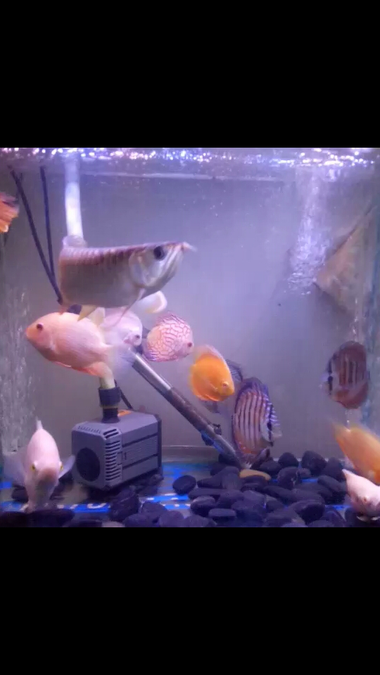 Ok【blue asian arowana】ay Aquaculture Forum