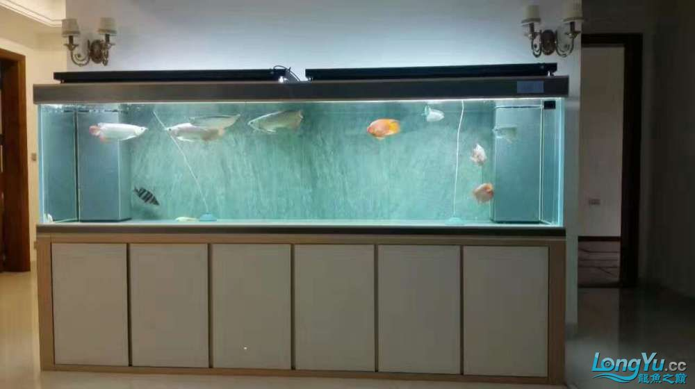 Learn how to raise arowana fish and learn from each other