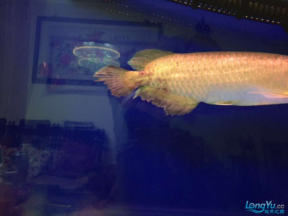 How to cure my star point AROWANA Forum ASIAN AROWANA,AROWANA,STINGRAY The4sheet