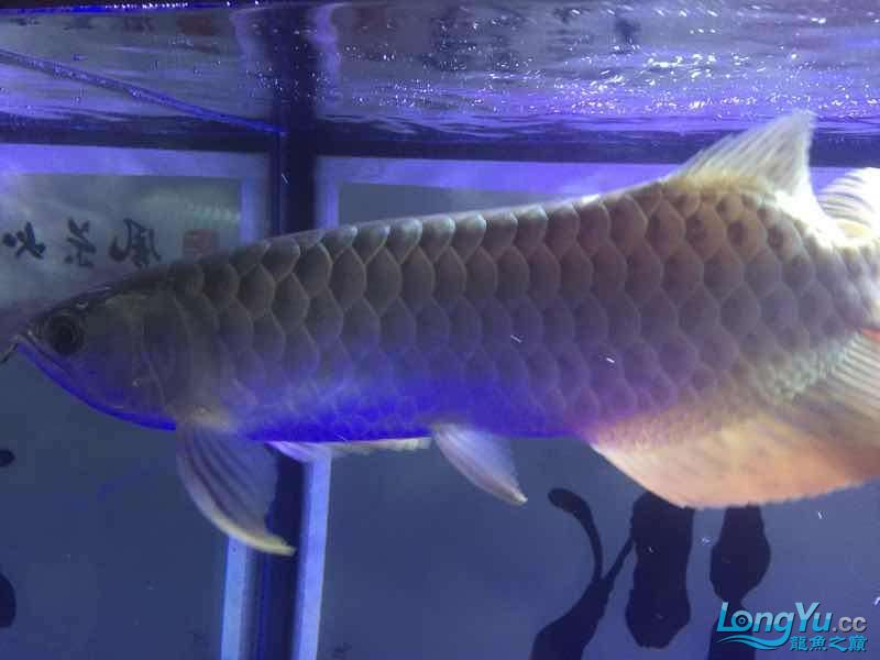 fish arowanaToday please Arowana AROWANA Forum ASIAN AROWANA,AROWANA,STINGRAY The4sheet