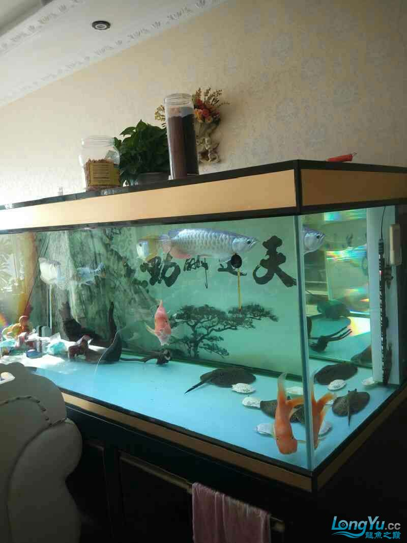 Yinlongs miserable jump jump Aquaculture Forum ASIAN AROWANA,AROWANA,STINGRAY The7sheet