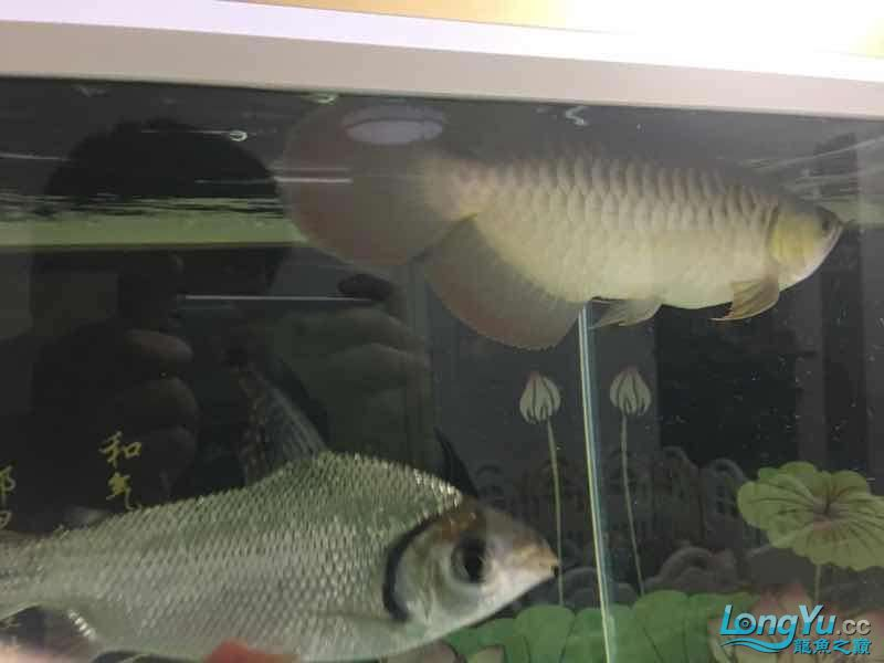 Okay is it red or orange? Aquaculture Forum ASIAN AROWANA,AROWANA,STINGRAY The1sheet