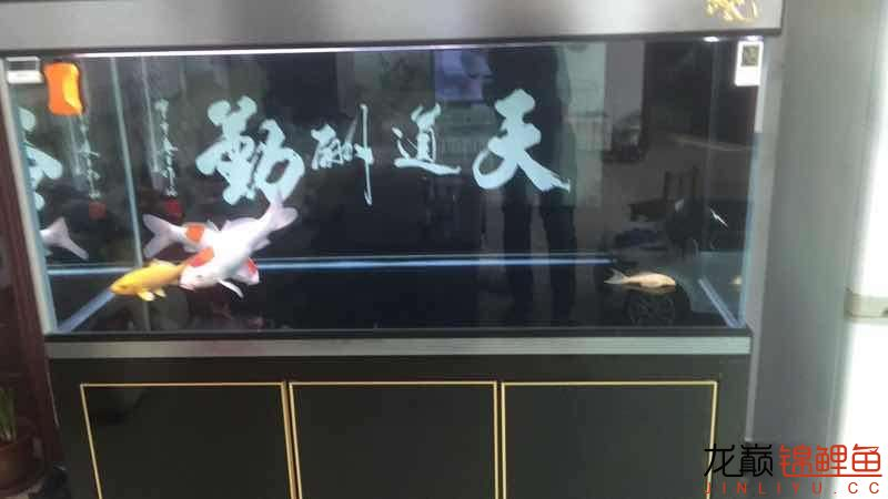 fish arowanaRaise casually AROWANA Forum ASIAN AROWANA,AROWANA,STINGRAY The2sheet