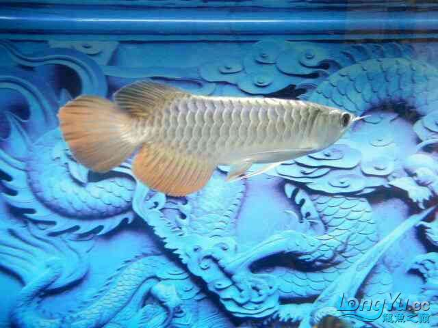 asian arowana for saleBuild a file for Xiaojin Aquaculture Forum ASIAN AROWANA,AROWANA,STINGRAY The2sheet