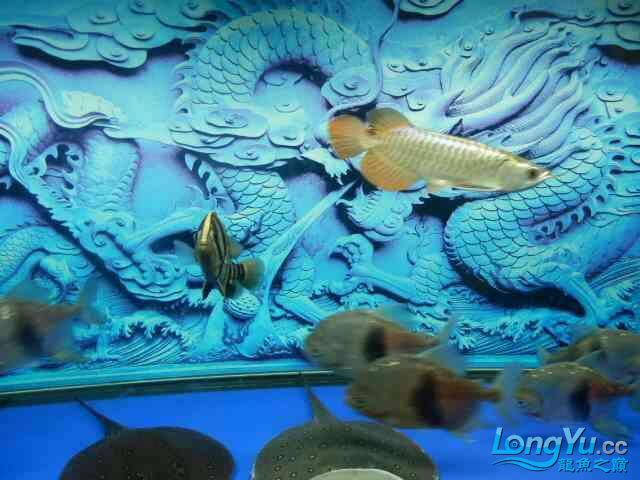 asian arowana for saleBuild a file for Xiaojin Aquaculture Forum ASIAN AROWANA,AROWANA,STINGRAY The3sheet