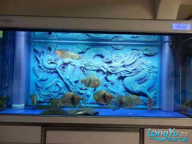 asian arowana for saleBuild a file for Xiaojin Aquaculture Forum ASIAN AROWANA,AROWANA,STINGRAY The4sheet