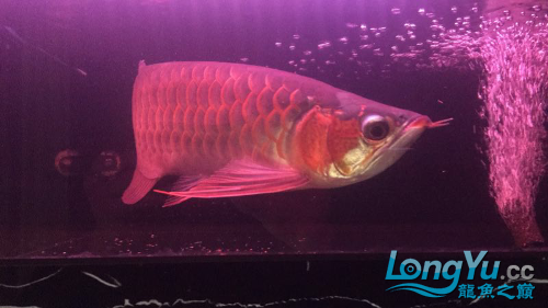 arowana lightHelp choose fish